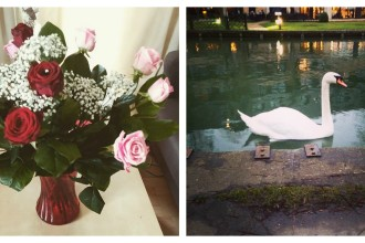 valentines-day-flowers-swan