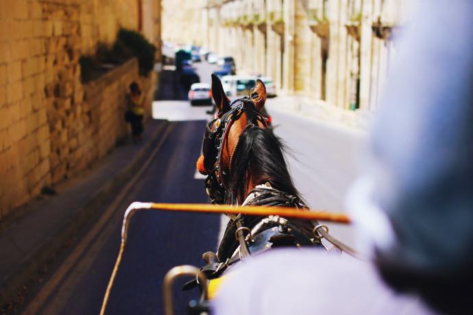 horse tour malta