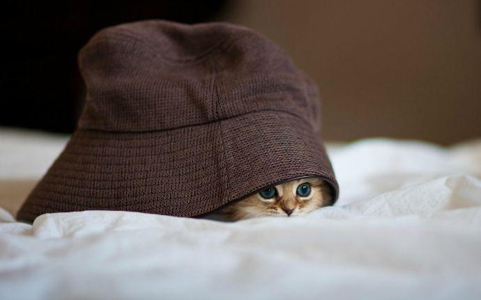 cat_hat_peep_hide