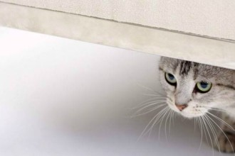 cat_hiding